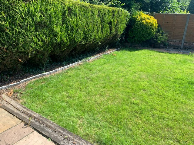 garden in need of a revamp